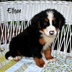 ethan1 c