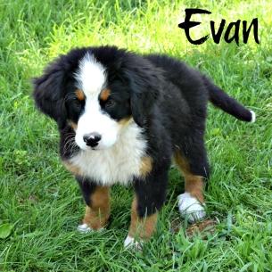 evan c