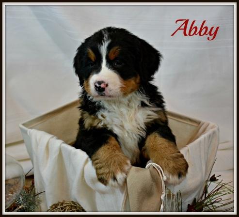 Abby 25