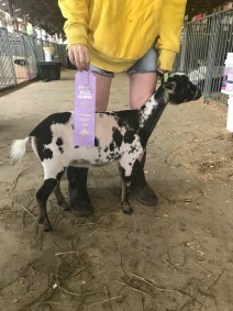 Star: Reserve Junior Champion at Huntingdon Fair